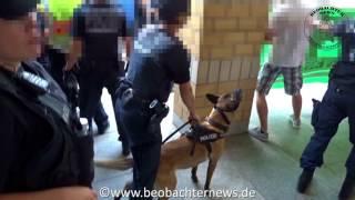 Polizeihund gegen Demonstrant