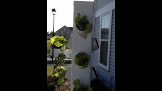 Hydroponic Vertical Tower And Deep Water Culture Gardens Diy