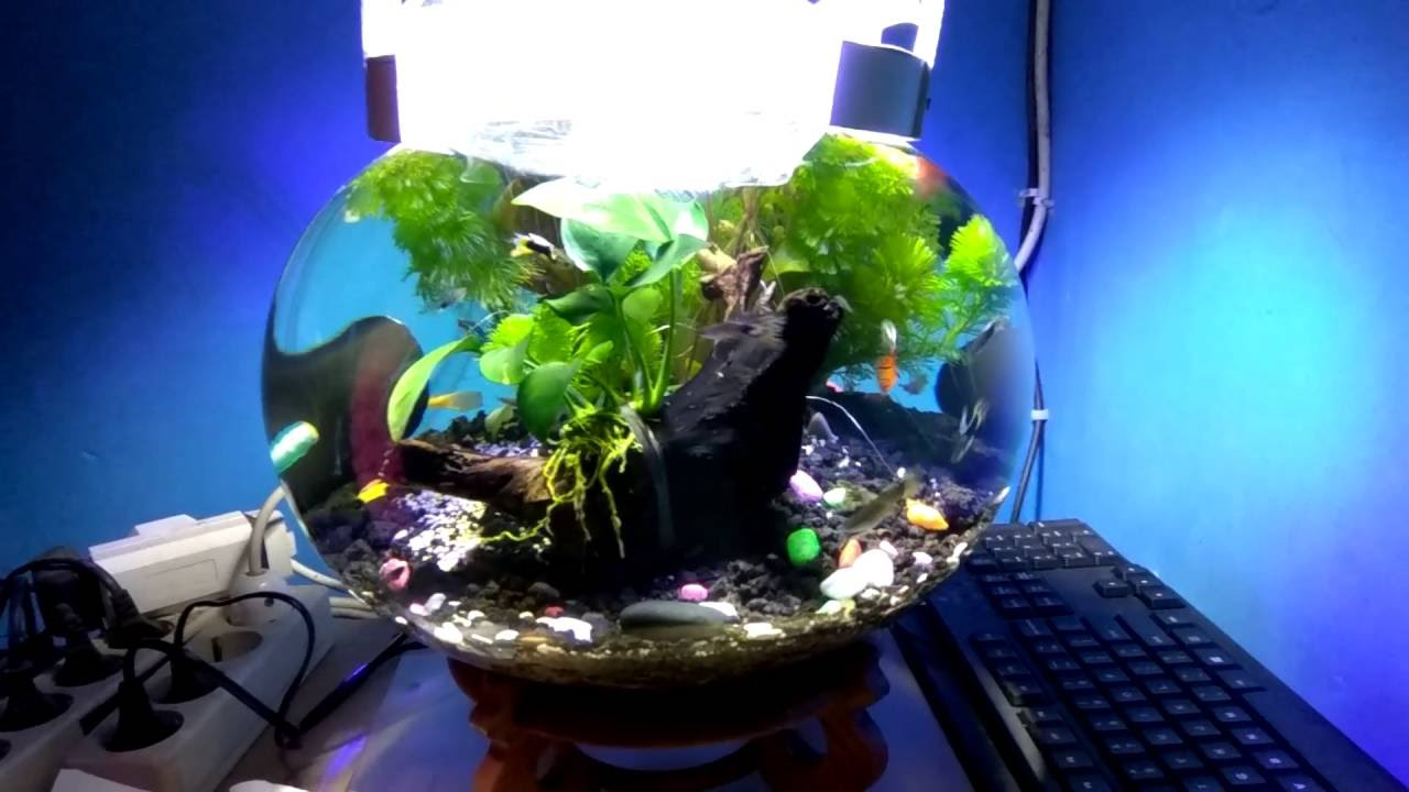 Aquarium Bulat Dengan Co2 Diy Youtube