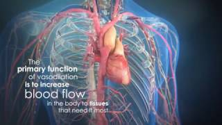 What is Nitric Oxide (NO) and how it works in your body