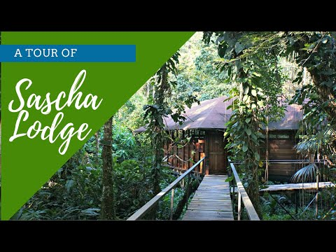 A Tour Of Sacha Lodge - Ecuador Amazon