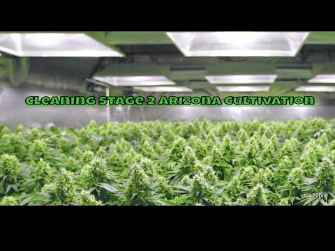 Cleaning the 2nd Stage Cannabis Grow