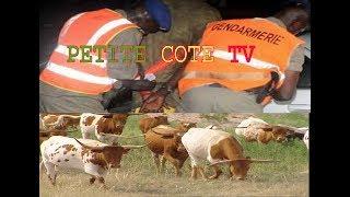 Vol de bétail : la Gendarmerie met aux arrêts une bande de malfaiteurs