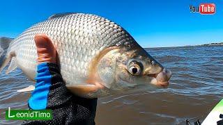 Сегодня хорошо порыбачил на каяке. РЫБАЛКА НА ДОНКУ В ОКТЯБРЕ НА КАЯКЕ. Ловля рыбы. Буэнос Айрес