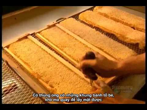 Quy trình sản xuất mật ong