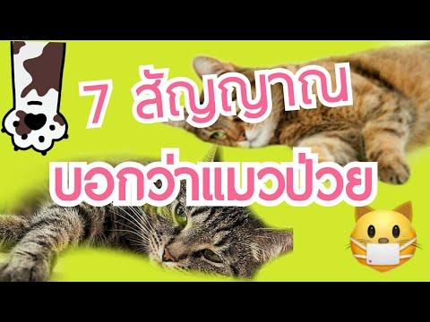7 สัญญาณ ที่บอกว่าแมวป่วย   Cat story  