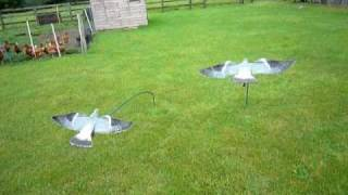 My home made Pigeon bouncer with Sillosock hypa flaps