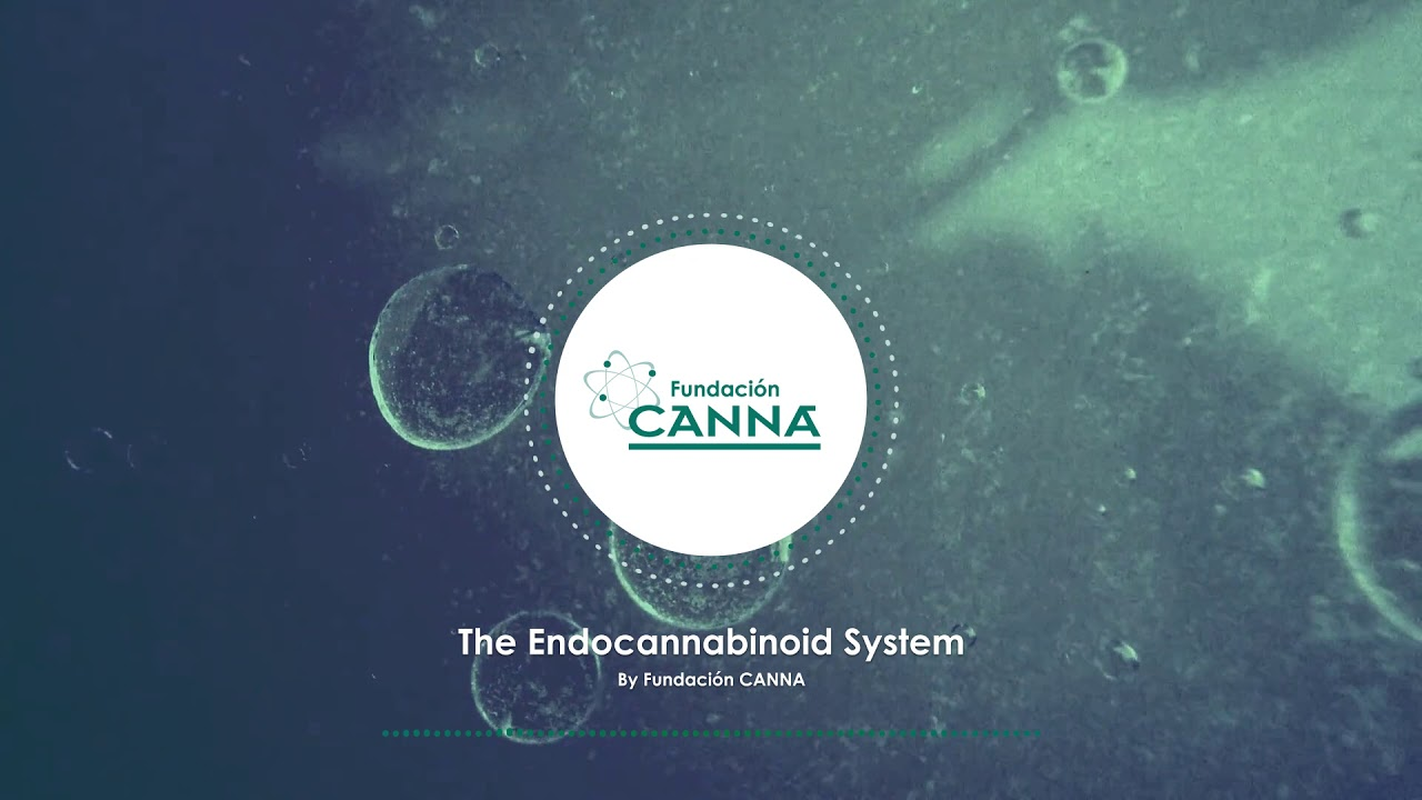 The Endocannabinoid System - Audio Article (English)