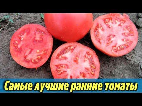 Самые лучшие раннеспелые сорта томатов Описания и характеристики ранних помидоров | раннеспелые | выращивание | урожайные | помидоры | томатов | помидор | ранние | лучшие | сорта | самые