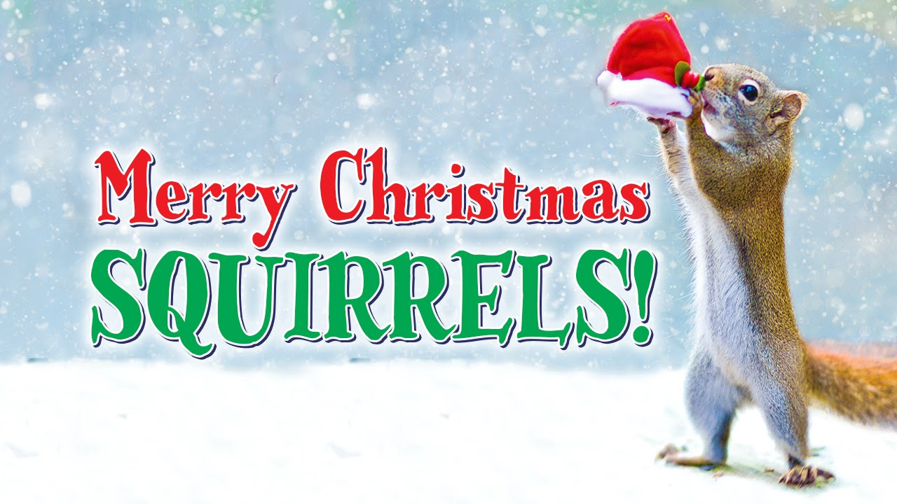 MERRY CHRISTMAS, SQUIRRELS! by Nancy Rose - YouTube