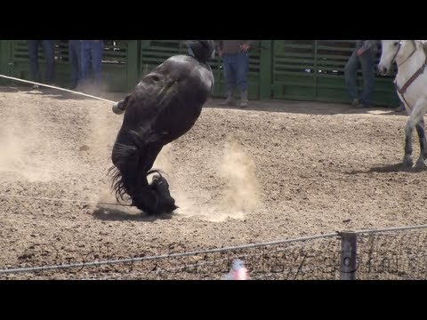 SHARK Exposes The AQHA (American Quarter Horse Association)