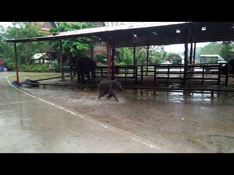 Baby elephant having fun in the rain