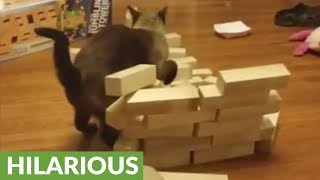Bully cat attacks and destroys wooden block tower