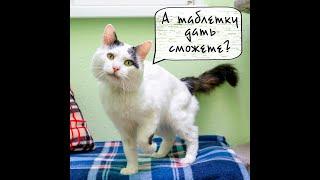 Екатеринбург Гостиница для кошек ЗаМУРчательные кошки. Как дать коту таблетку