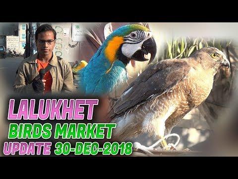 Lalukhet Sunday Birds Market Latest Updates 30-12-18(Jamshed Asmi Informative Channel) In Urdu/Hindi