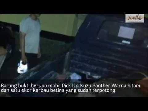 Oknum TNI dan Satu Masyarakat Sipil jadi Tersangka Pencurian Hewan Ternak di Aceh