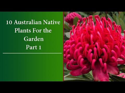 10  Colourful Australian Native Plants