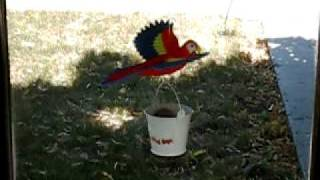 Wind Powered Flying Scarlet Macaw Parrot Yard Garden Decoration Weathervane Windsock Whirligig