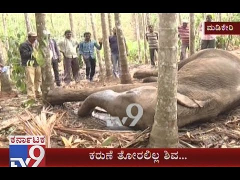 Elephant Which Was Stuck In Sludge In At Kodagu Is No More