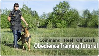 "Obedience Training. Command ""heel"" Off Leash"