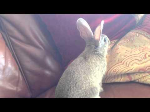 Wild rabbit in the house!