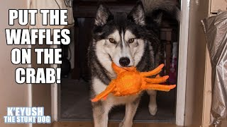 husky-brings-crab-for-waffles-instead-of-a-bowl