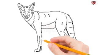 How to Draw a Coyote Step by Step Easy for Beginners/Kids – Simple Coyotes Drawing Tutorial
