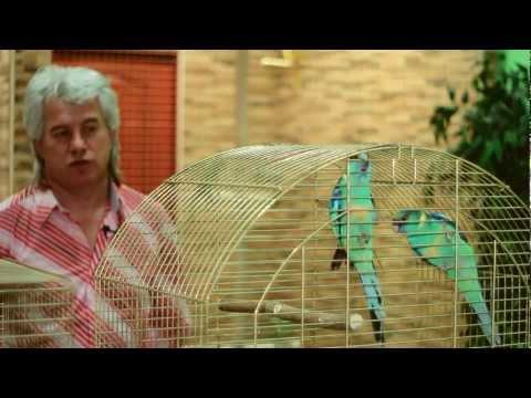 Все О Домашних Животных: Травяные Попугаи И Бернарды