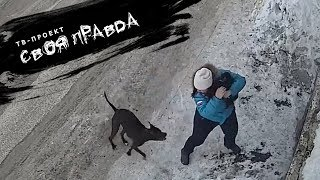 НЕ НАШЕ СОБАЧЬЕ ДЕЛО? - напала собака, что делать - домашние животные - СВОЯ ПРАВДА