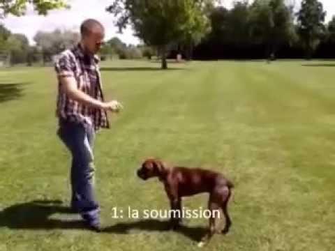 comment dresser son chien de 6 ans