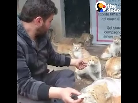 This Guy Is Saving Cats In War-Torn Syria