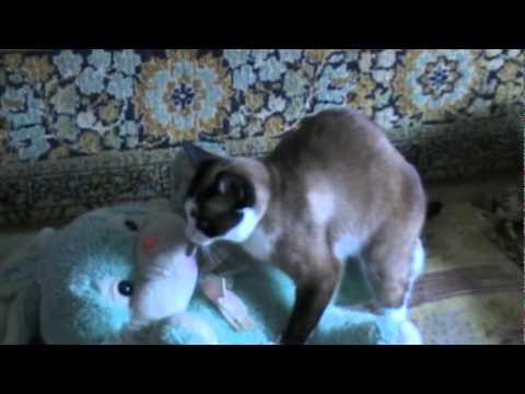 Сексуальность котов
