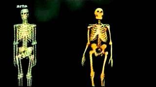 Anfänge der Menschheit -  Homo Sapiens, der letzte seiner Art