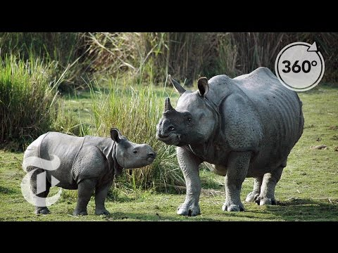 Tracking Down Rhino Poachers in India | The Daily 360 | The New York Times