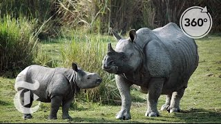 Tracking Down Rhino Poachers in India | The Daily 360 | The New York Times thumbnail