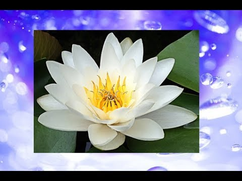 how to make water lily flower with paper
