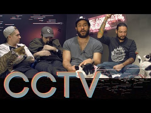 Download Youtube: CRUMBS & WHISKERS CAT CAFE • CCTV #20