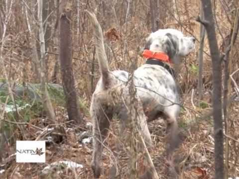 Best Grouse Dog Work