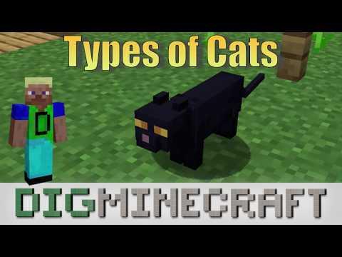 Cat in Minecraft