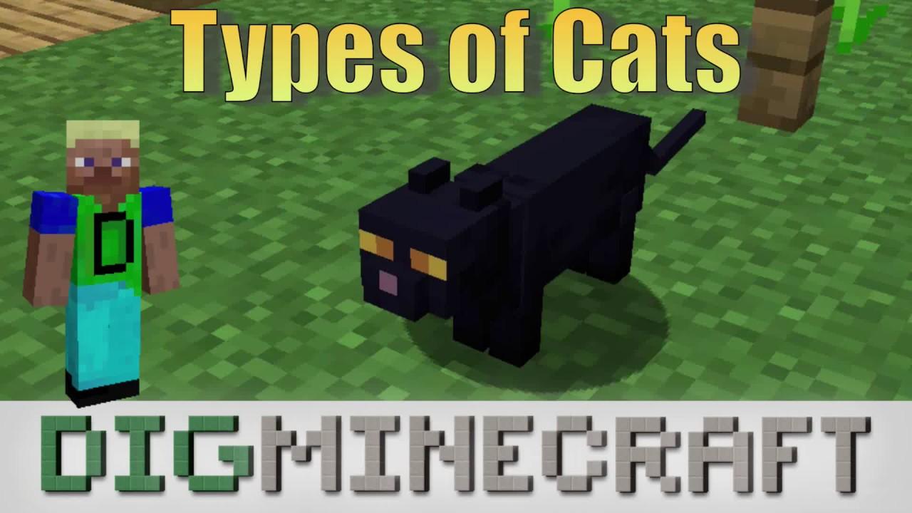 Types Of Cats In Minecraft Village Pillage Update Youtube
