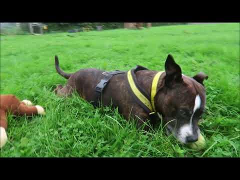 Dogs Trust Bridgend - Sasha