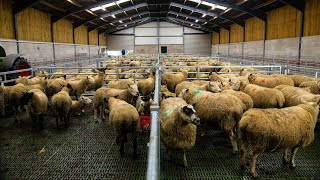 建筑物焦点:Agriland的Michael Geary对Sam Thompson发表讲述他的新款羊肉单位