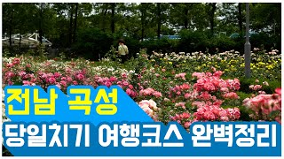 꽃구경 하실래요? 국내여행 당일치기 곡성여행(6월에 가…