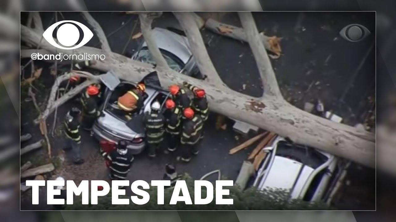 Chuva em SP: temporal derruba árvores e faz vítima fatal