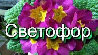 БЕГОМ в СВЕТОФОР Сенсационные НОВИНКИ ОРХИДЕЯ много цветовОБЗОР ПОЛОЧЕК февраль 2019