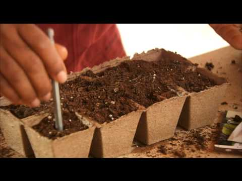 how-to-start-seeds-indoors