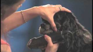 How To - Grooming A Cocker Spaniel