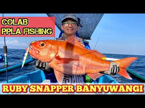 MANCING BERSAMA SUBSCRIBER JAKARTA, PPLA FISHING   HUNTING RUBY SNAPPER   VLOG MANCING Episode #55