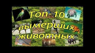 Топ - 10 - Вымершие животные, которых мы больше никогда не увидим