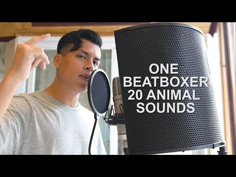 One Beatboxer, 20 Animal Sounds